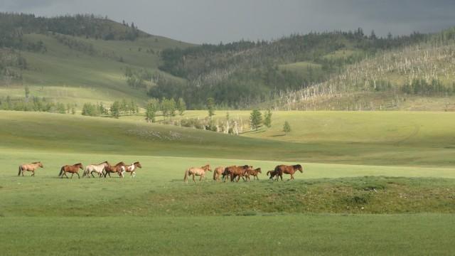 Soirée Mongolie